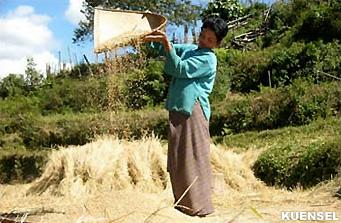 Raonline Bhutan Economy Zhemgang Harvesting The Old Way