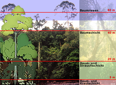 Tropischerregenwald in indonesien und malaysia