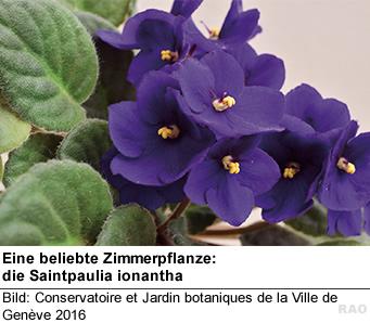 Raonline edu pflanzen in den tropen von den tropen ins wohnzimmer - Epiphyten zimmerpflanze ...