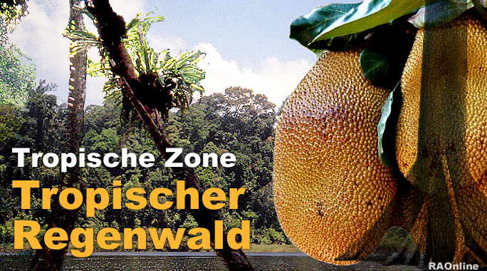 ra online edu tropischer regenwald klima